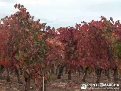 Enología en Rioja - Senderismo Camino de Santiago; sendero mallorca